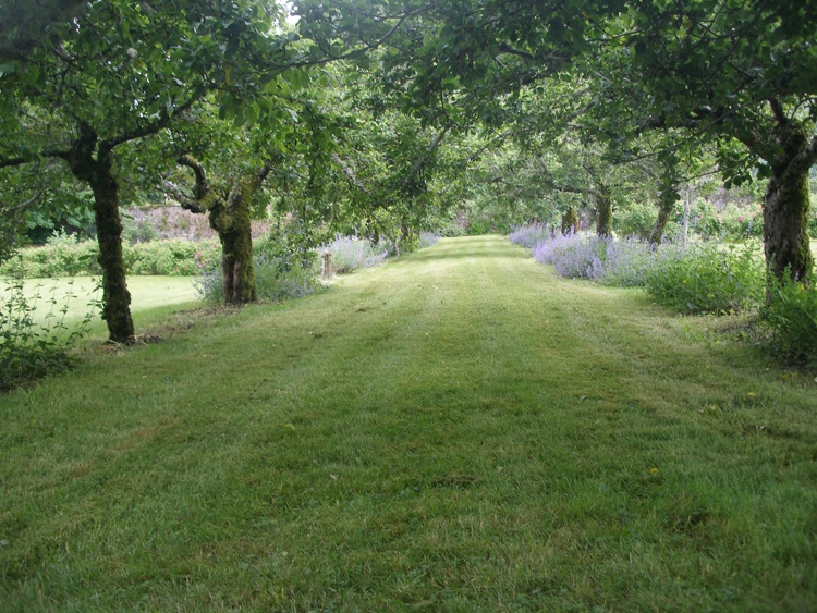 The apple tree avenue in the summer