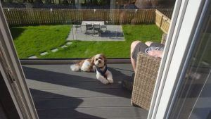 Dog Friendly cottages in Perthshire
